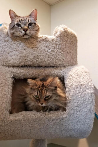 Denali & Mango in the Cat Suite