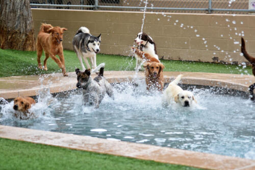 Dive into Swim Time at Applewood Pet Resort