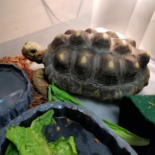 Turbo the Turtle in the Critter Room