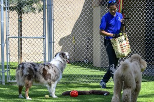 Doggie Daycare Group Play