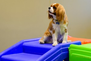 King Charles in indoor play room